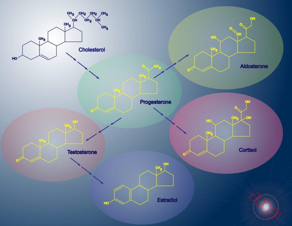 Schematische Darstellung der Biosynthese der Steroidhormone. Gefäßchirurgie